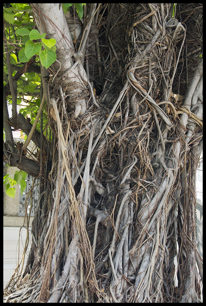 Twisted Bark Tree Roots Debra S Haven My Diary Of My