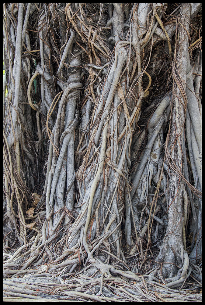 twisted bark � tree roots debras haven � my diary of my